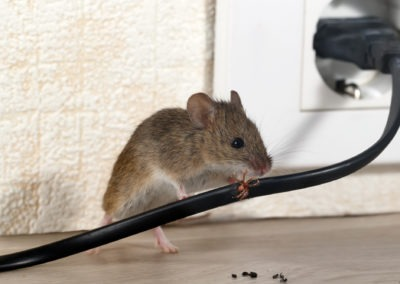 Are You Inviting Pests into Your Southern Maryland Home?